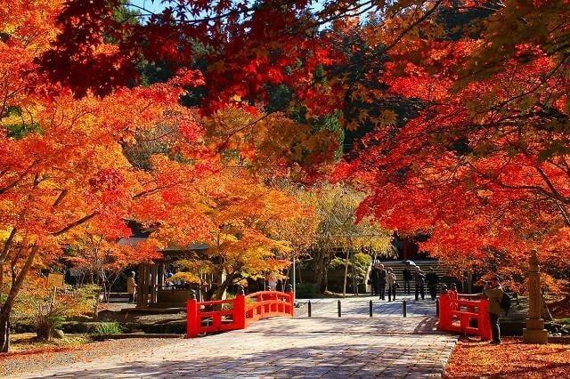英霊殿付近の紅葉