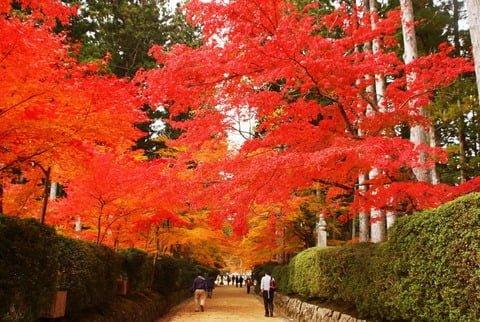 高野山の紅葉の見頃は10月下旬から!おすすめスポットはこちら