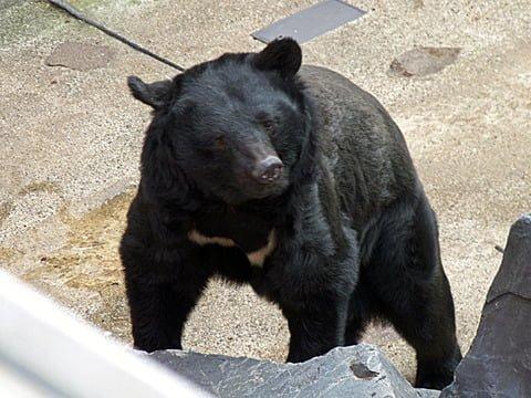 【熊出没注意!】高野山散策時の独り歩きは要注意!!